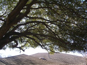 Before Amp After Tree Service By Dantree Service By Dan