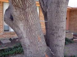 Tree Services Dallas - cracked base before