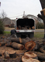 Dallas Tree Removal - After